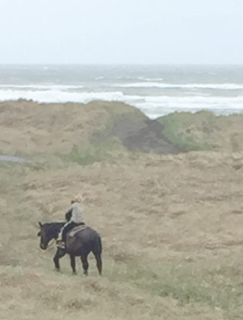 image of horses at the beach as this single mom slides into vacation